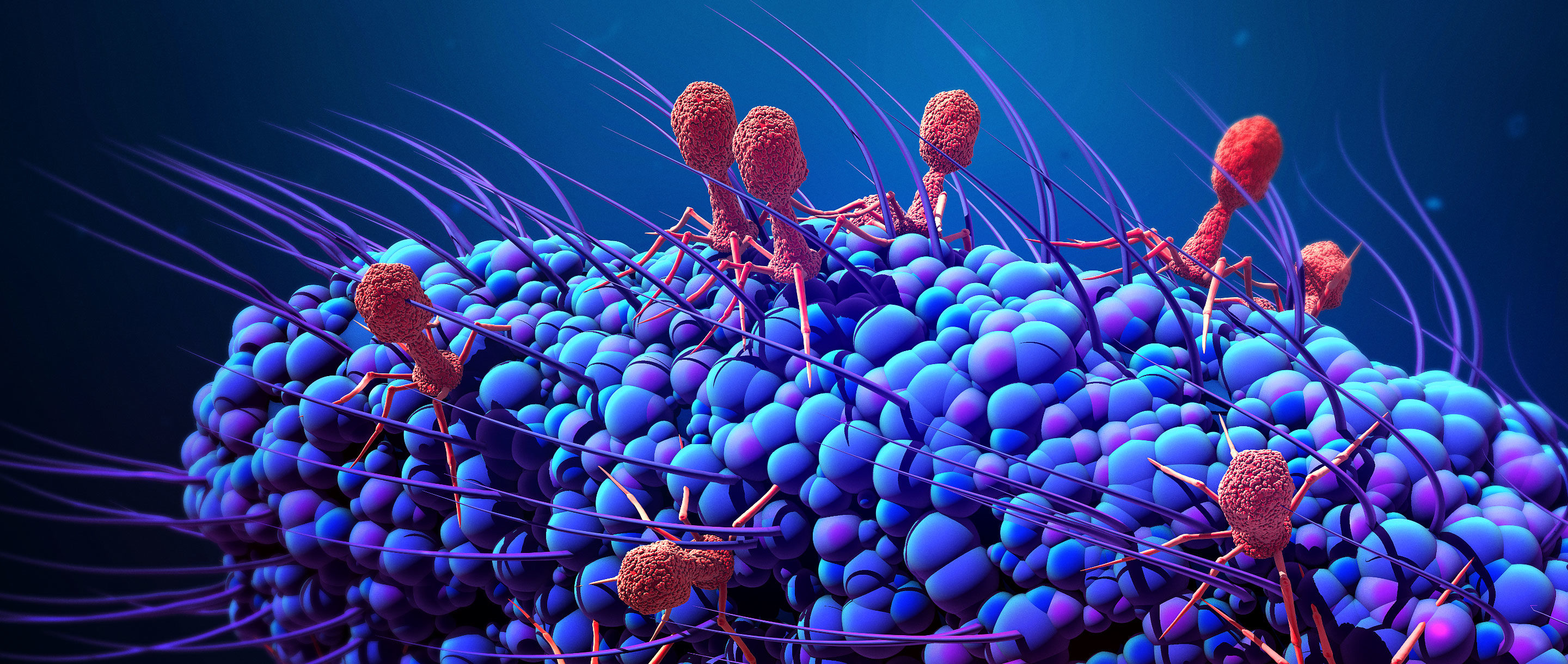 "Art for ""'Broadband' Networks of Viruses May Help Bacteria Evolve Faster"""