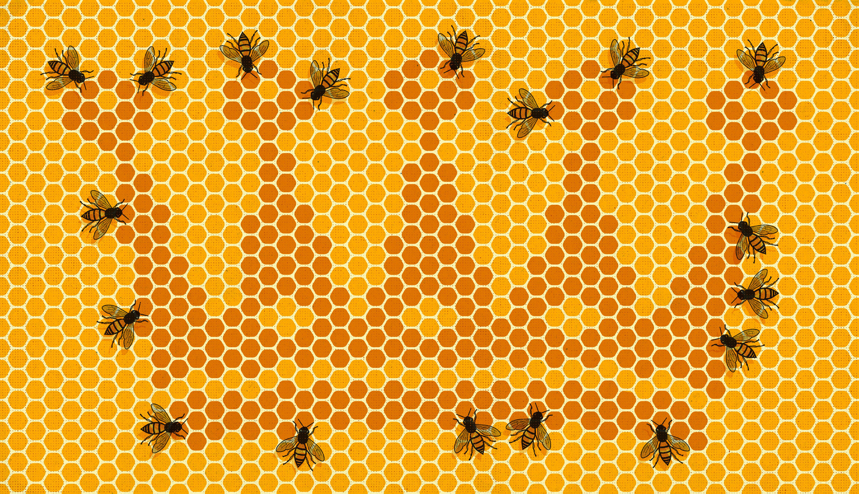 "Art for ""How Equality and Inequality Shape the Birds and the Bees"""