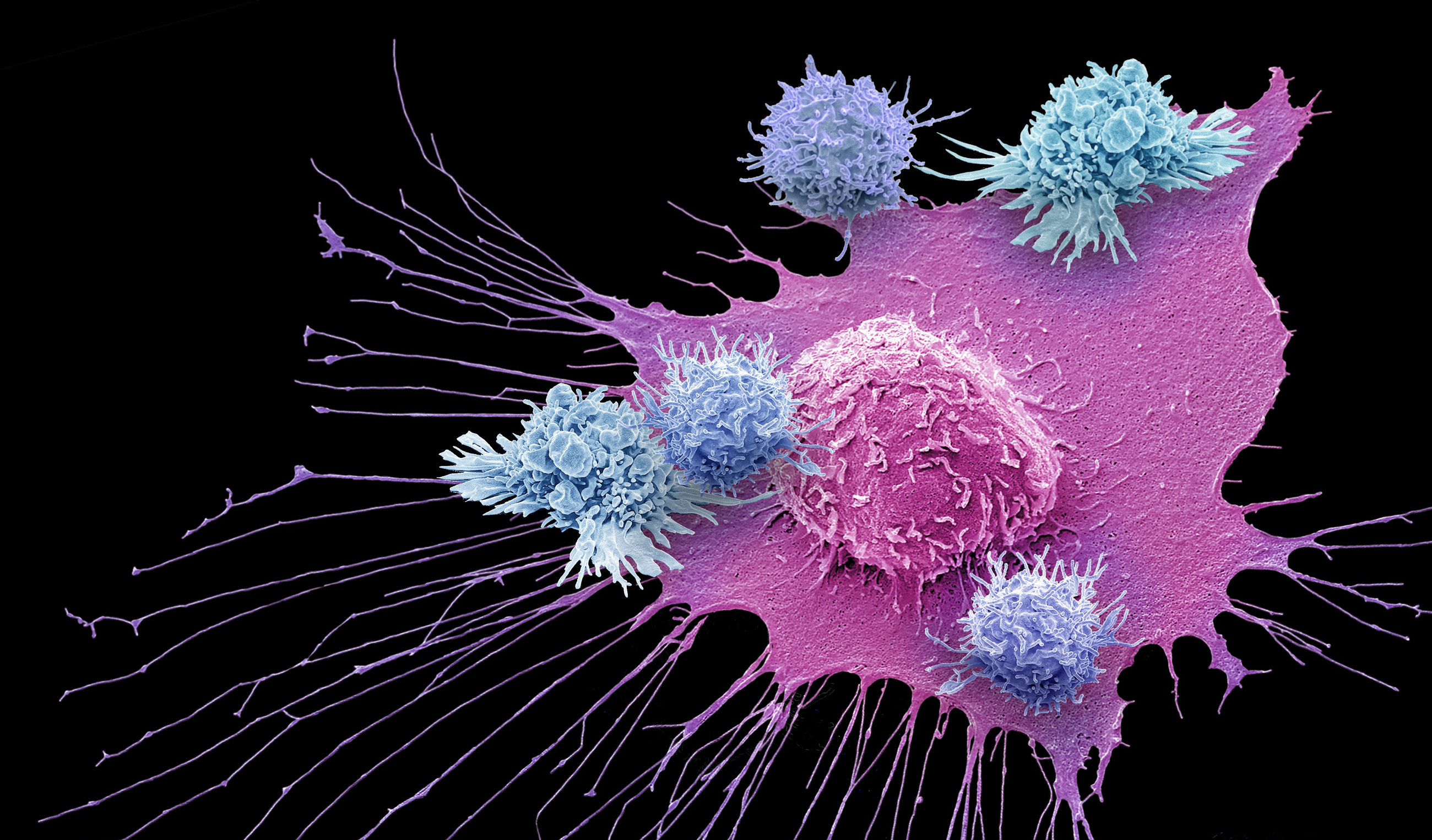 "Art for ""Nobel Prize Awarded for Cancer Immunotherapy"""