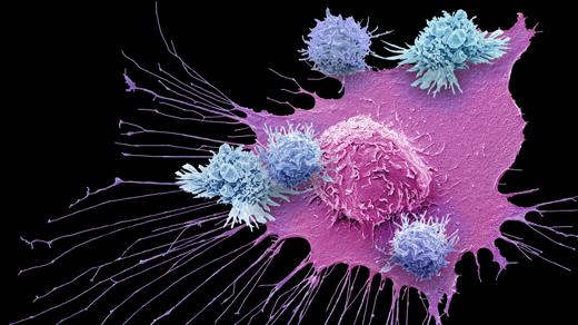 James P. Allison and Tasuku Honjo Win Nobel Prize for Cancer Immunotherapy | Quanta Magazine