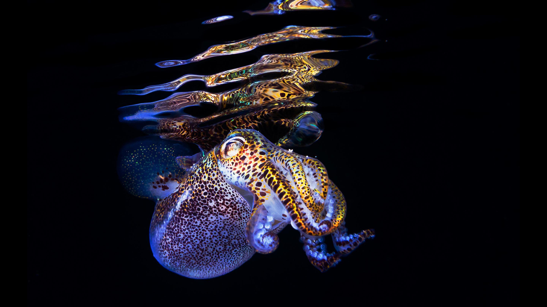 New Squid Genome Shines Light on Symbiotic Evolution