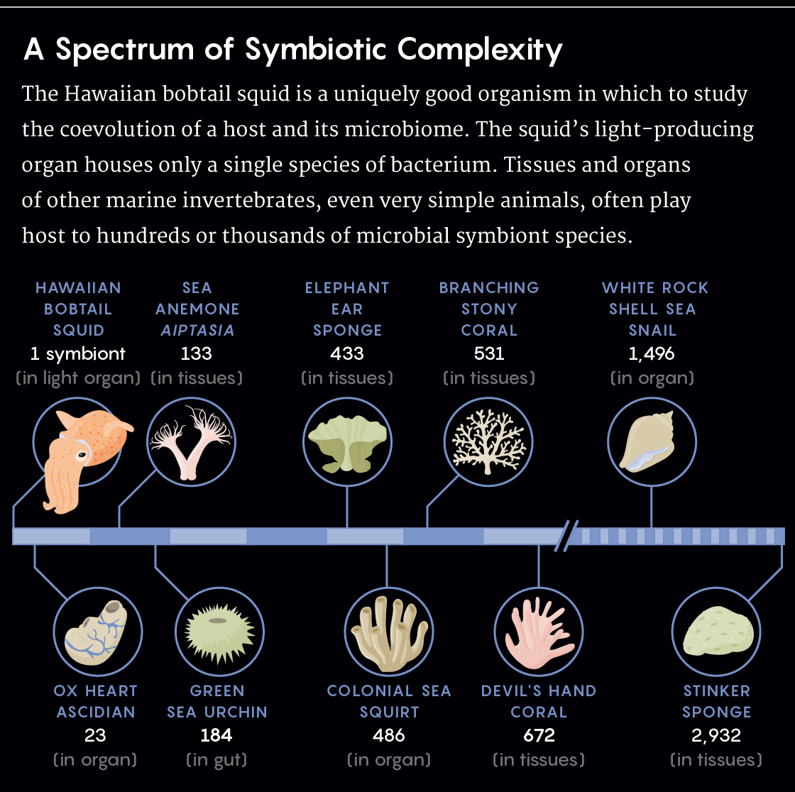 GRAPHIC: SYMBIOSIS SPECTRUM