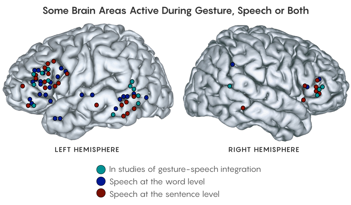 FIGURE: Showing the regions of the brain utilized during speech and gesture