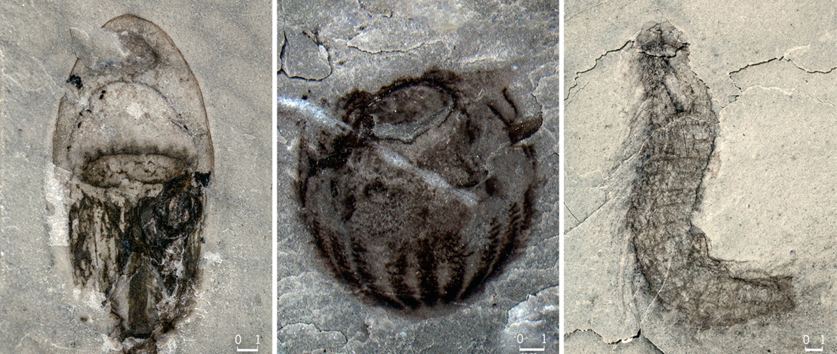 """Art for """"Rapid Oxygen Changes Fueled an Explosion in Ancient Animal Diversity"""""""