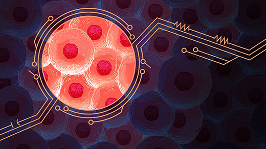 An illustration that shows a fanciful view of cells in terms of electrical circuitry.