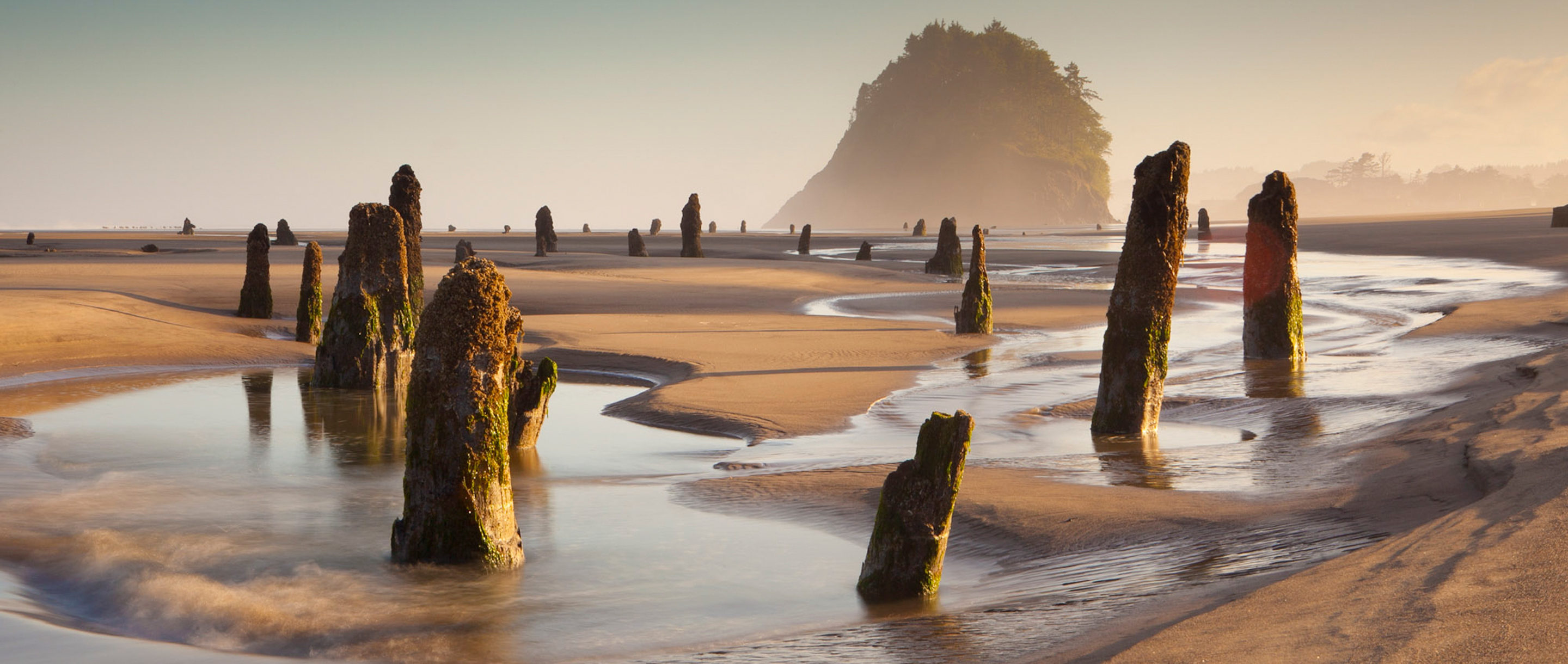 A sandy beach at low tide dotted with ancient tree stumps.