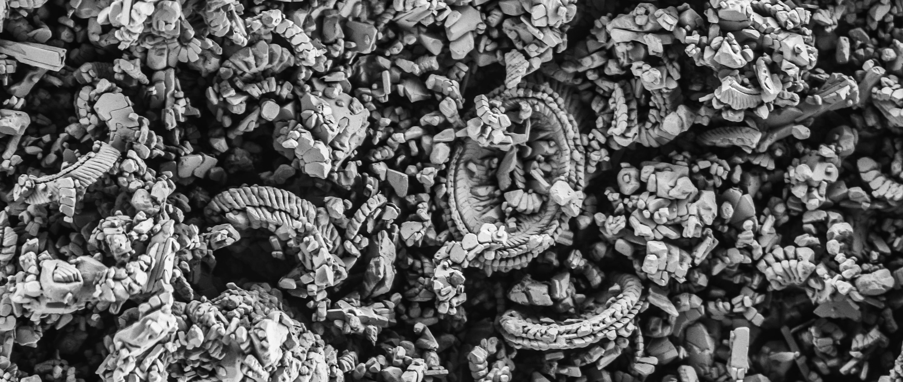 Scanning electron micrograph of a cluster of coccolithophores.