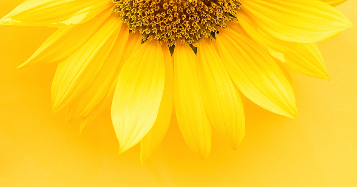 Mathematicians Begin to Tame Wild 'Sunflower' Problem