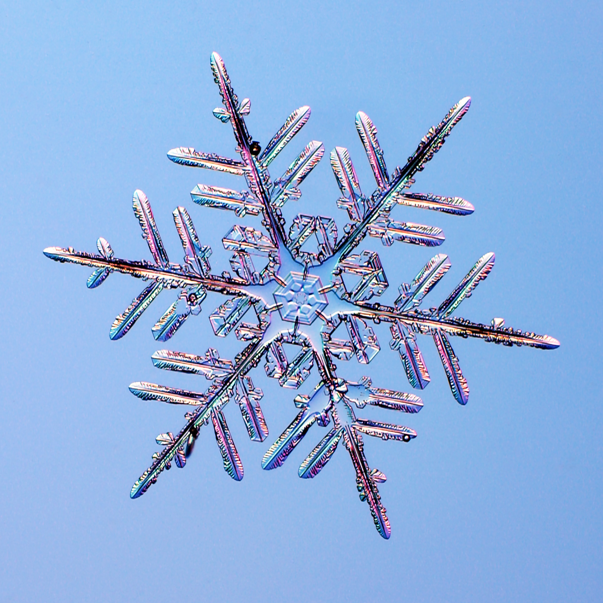 One of three close-up images of star-like snowflakes on a blue background.