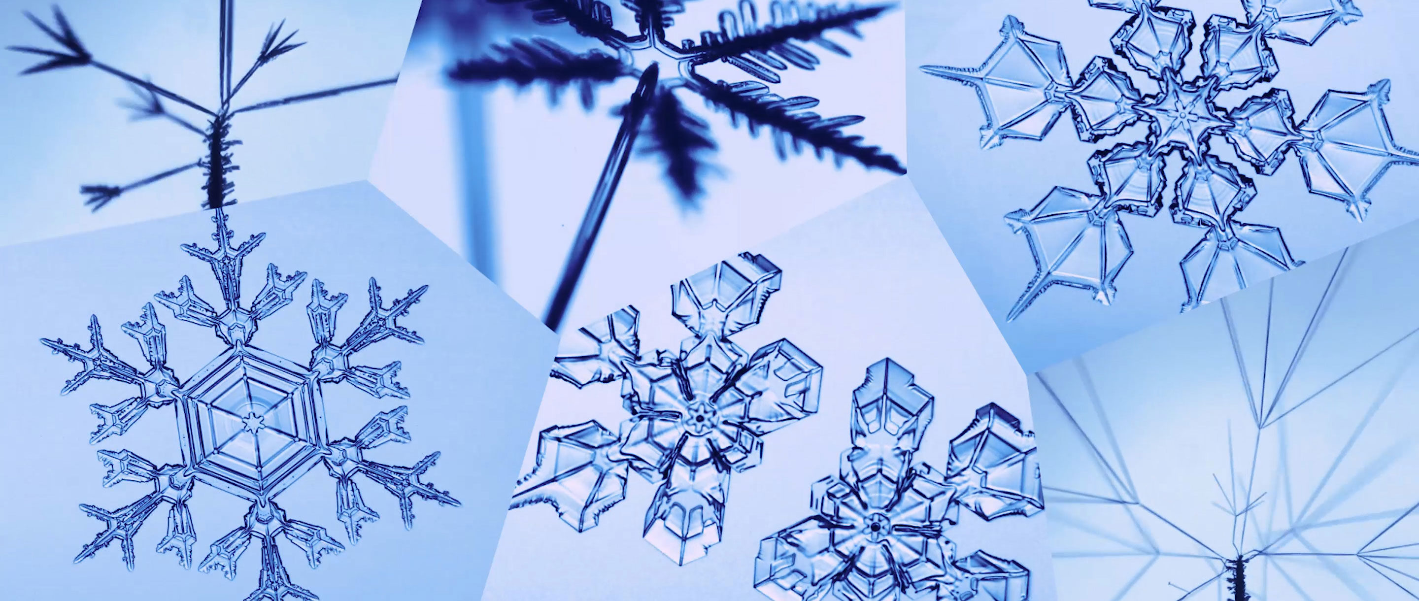 Six looping videos of different types of snowflakes and snow crystals growing.