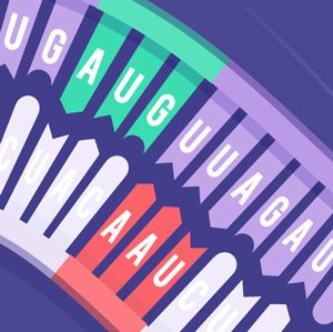 Illustration of an RNA sequence, with an arrow pointing from one end to the other, and a sequence of complementary nucleotides, with an arrow pointing the other way.