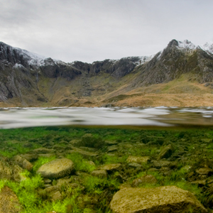 A split level photo shows algae growing on rocks both above and below the surface of the water at a margin of a Welsh glacial lake.