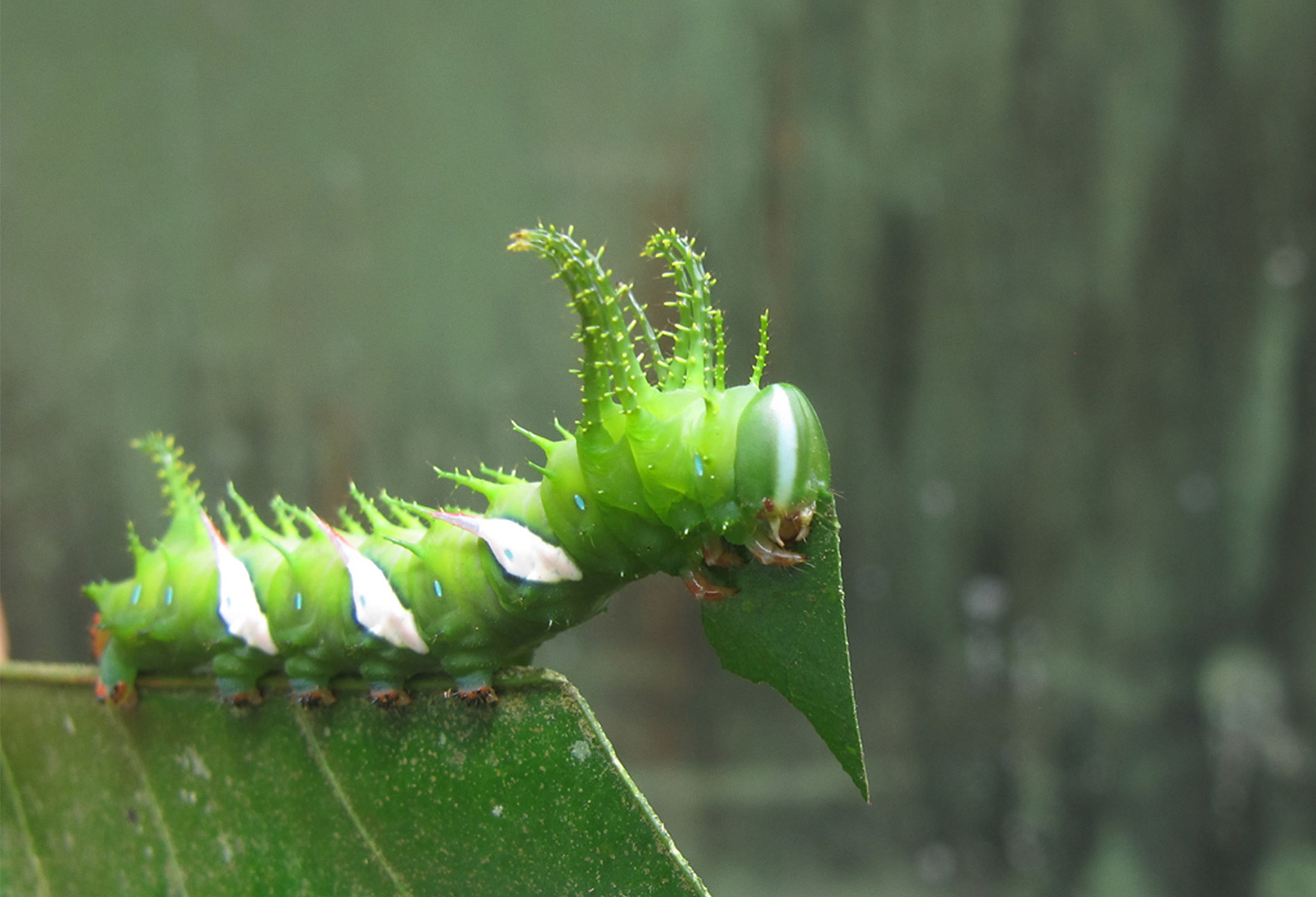 A caterpillar on a leaf.