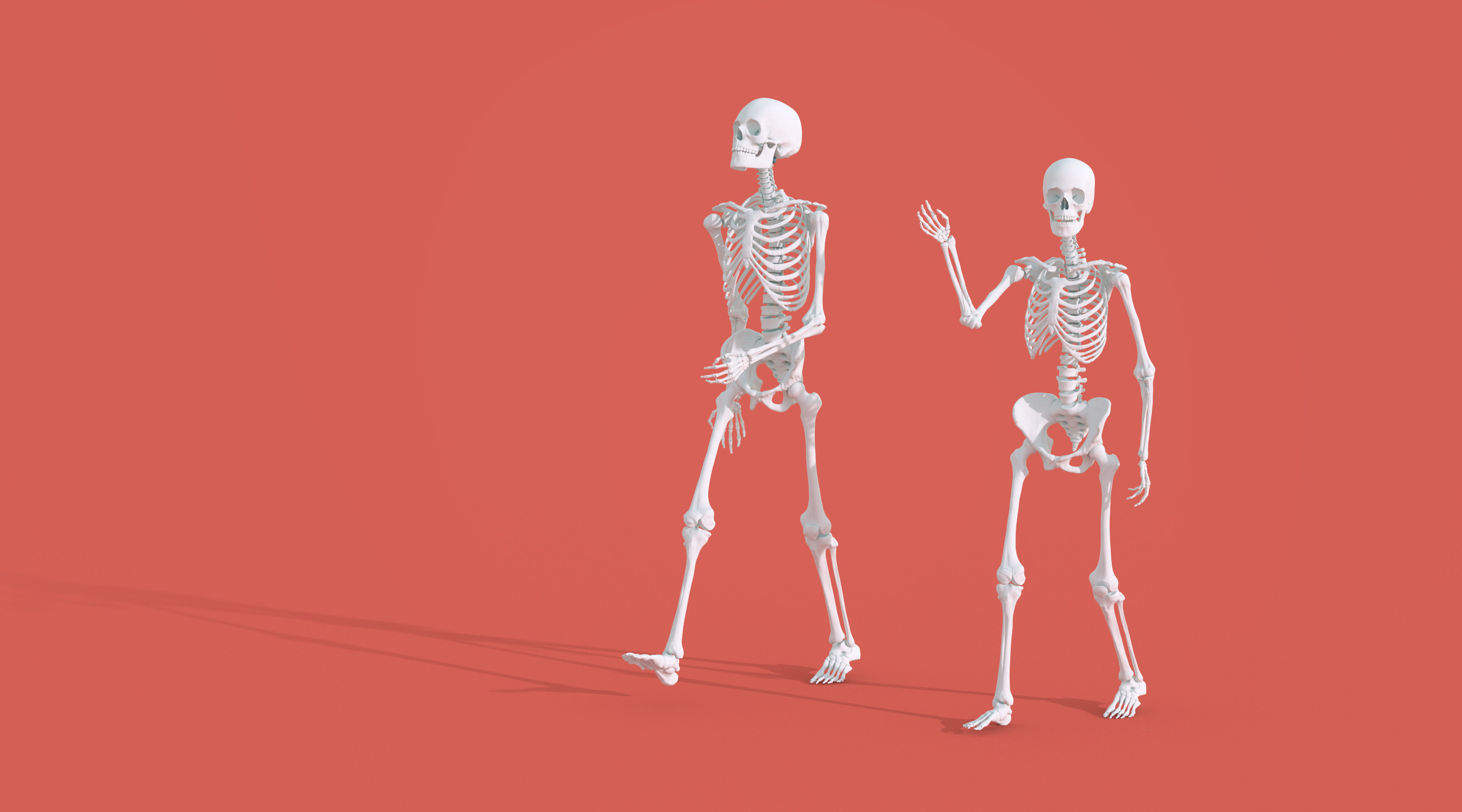 The skeletons of a man and woman, showing the difference in their heights.