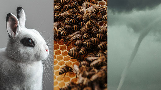 Side-by-side images of a rabbit, bees in a hive, and a tornado.