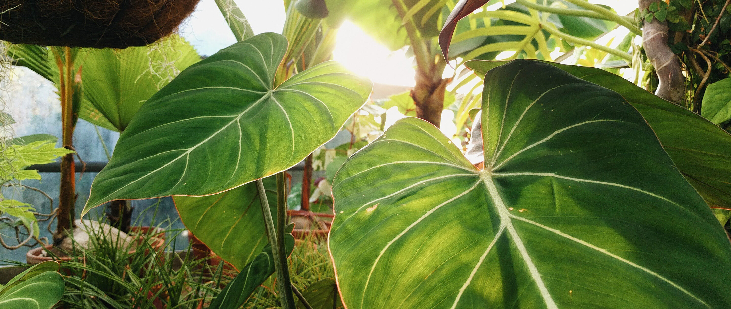Photo of green leafy plants in close-up.