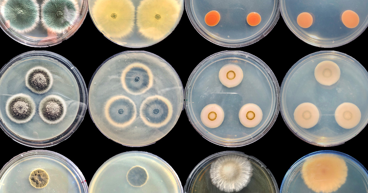 'Zombie' Microbes Redefine Life's Energy Limits | Quanta Magazine