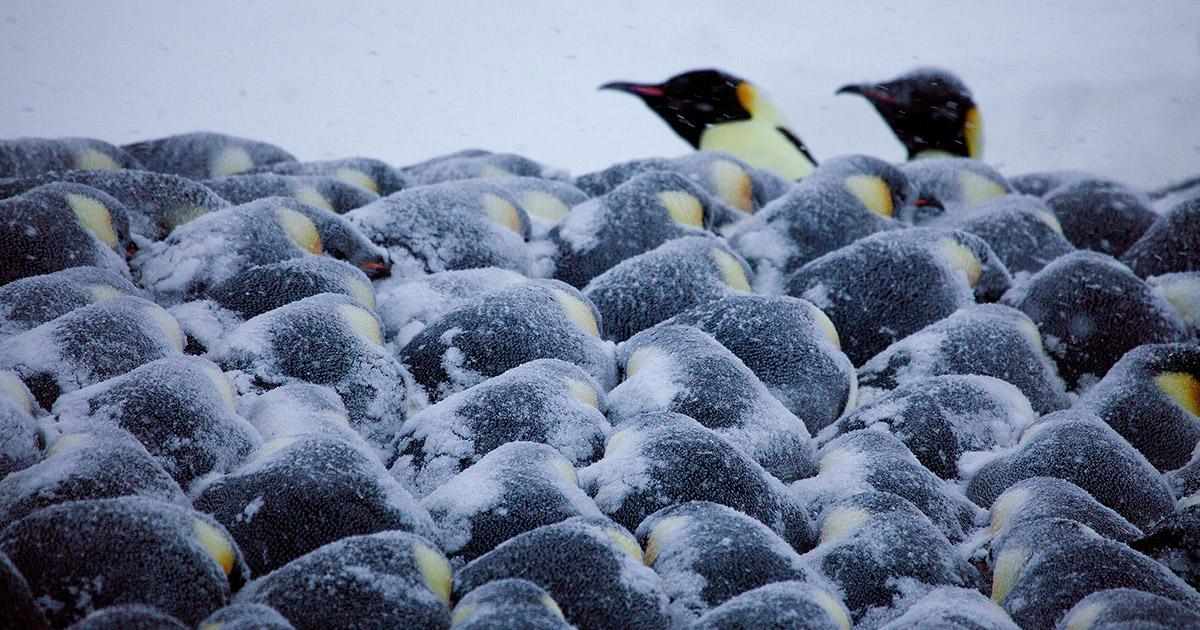 Math of the Penguins | Quanta Magazine