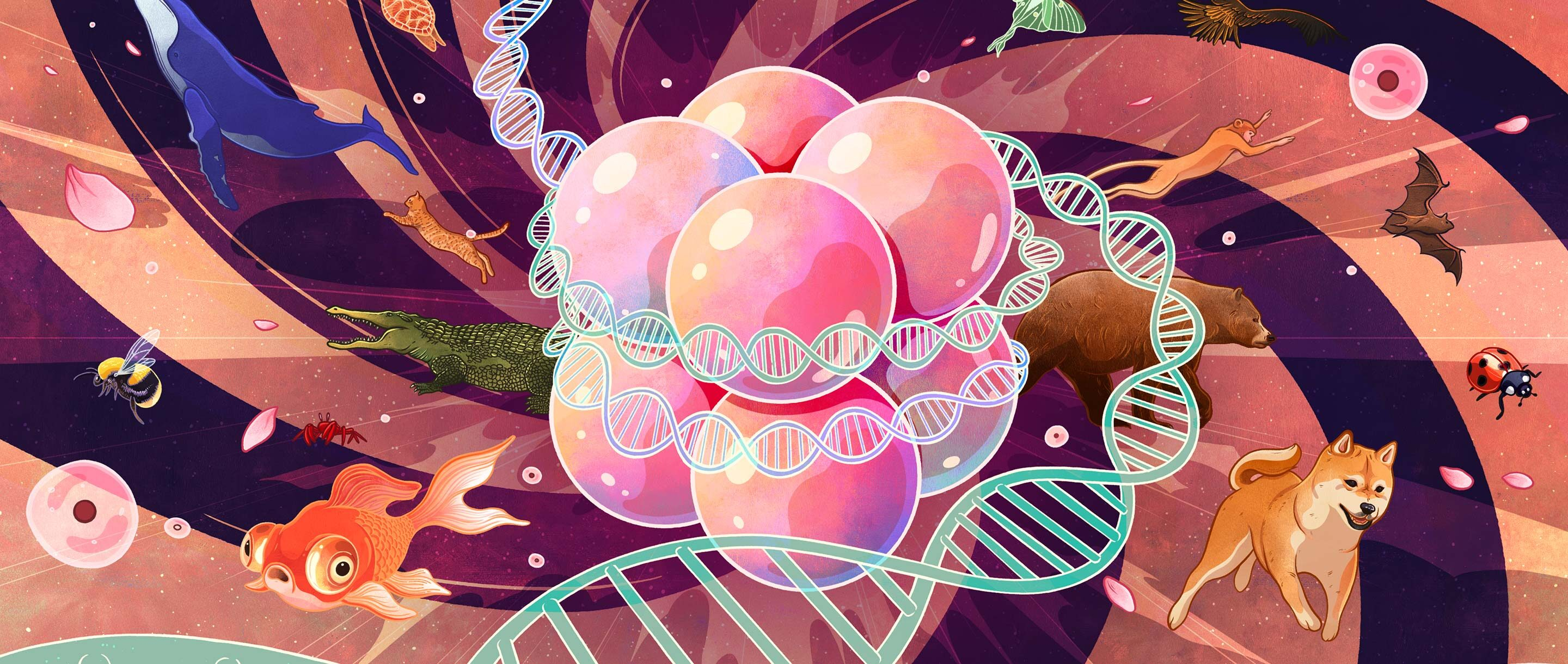 Illustration of DNA spooling around the histones in a classic nucleosome, with diverse animal life in the background.