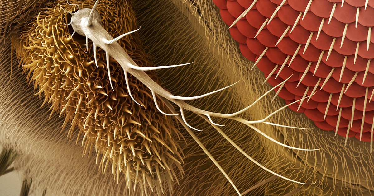 Secret Workings of Smell Receptors Revealed for First Time