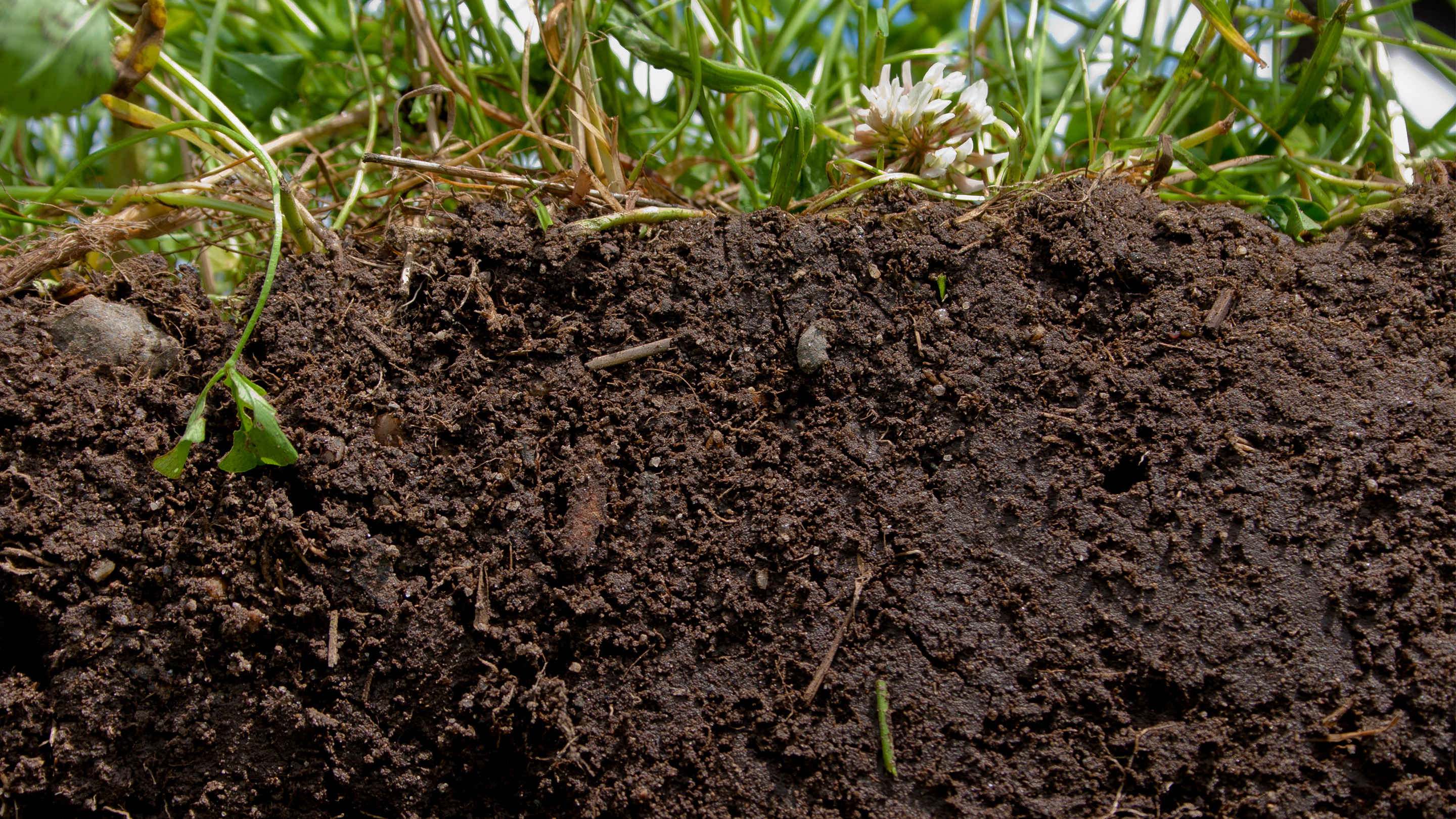 A cutaway of thick brown soil with grasses on top.
