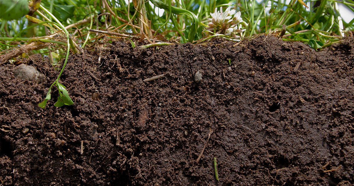 A Soil-Science Revolution Upends Plans to Fight Climate Change | Quanta Magazine