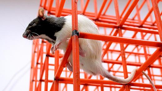How Animals Map 3D Spaces Surprises Brain Researchers thumbnail